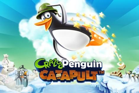 crazi penguin