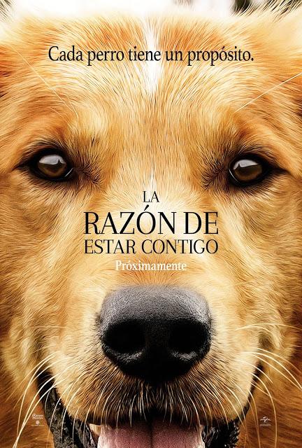la_razon_de_estar_contigo_poster_latino_jposters